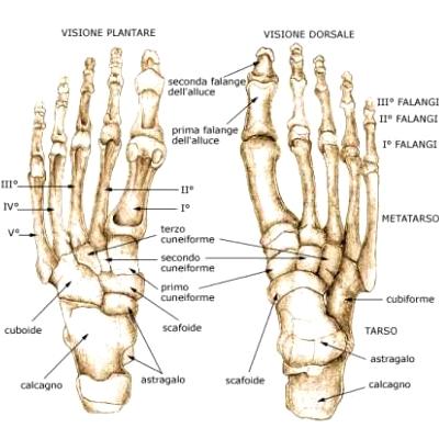 Anatomiaplantare