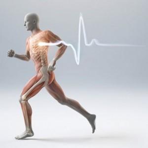 5 Consigli Per Abbassare Il Battito Cardiaco Nella Corsa