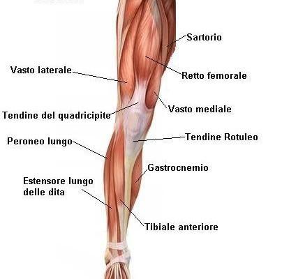 10-cose-da-non-fare-nel-dolore-tendineo-arto-inferiore